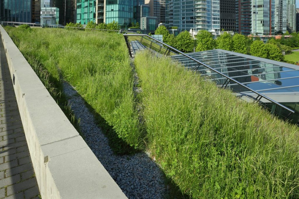 Going Green On Top: Heat-Mitigation Design is an Emerging Climate Solution on morrissegroup.com